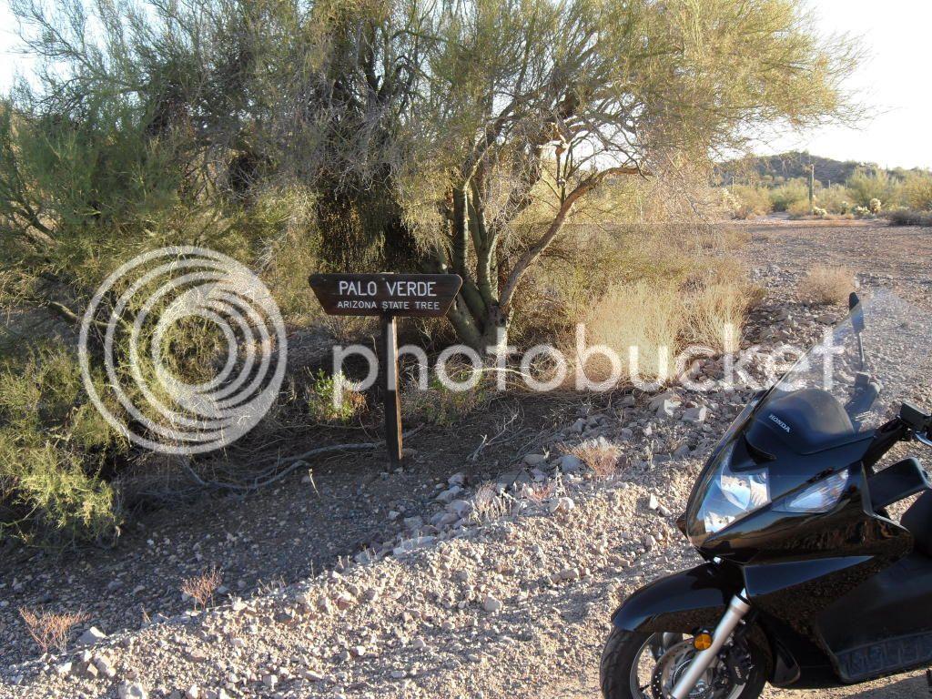 Gila Bend, AZ petroglyphs 11