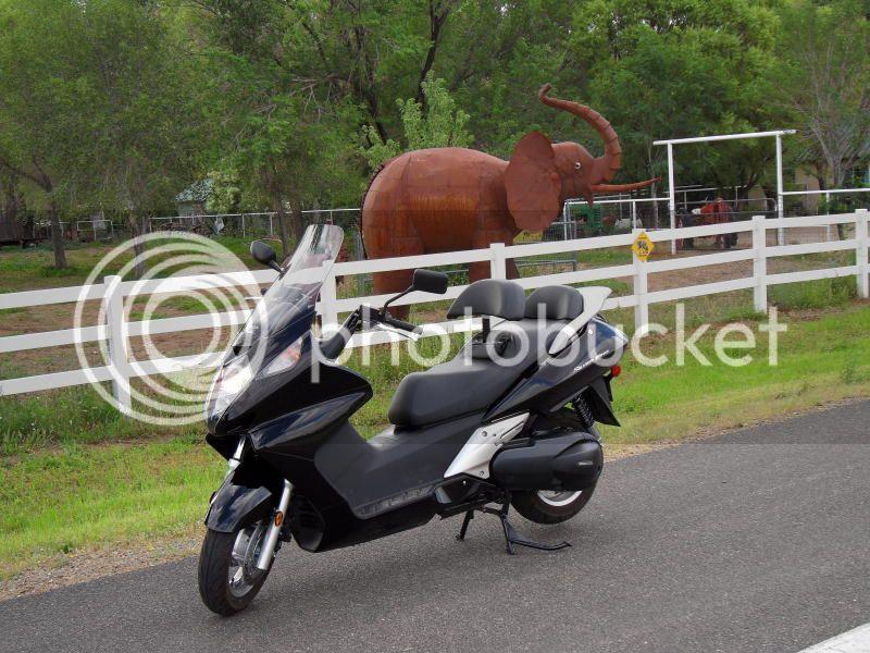 Short pre-ride to Prescott, AZ Elephant