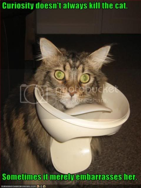 today's honoree is.......... Funny-pictures-cat-is-embarrassed