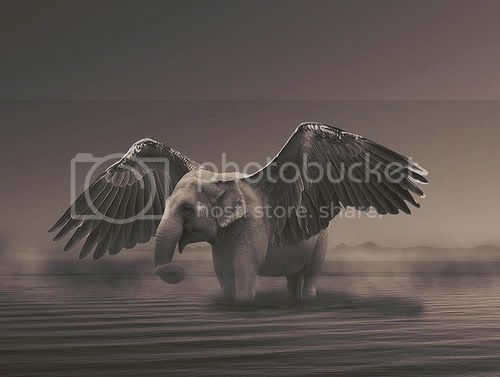 30 Fotos de animales manipuladas con Photoshop An14