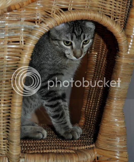 Το πιο τρυφερό γατάκι ψάχνει σπίτι 1381252_555553131160812_1990562166_n