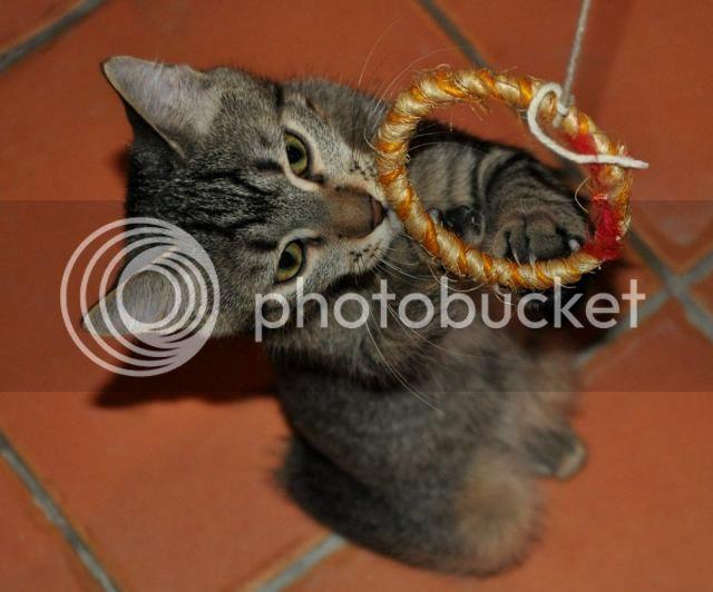 Το πιο τρυφερό γατάκι ψάχνει σπίτι 559835_555553421160783_815698033_n