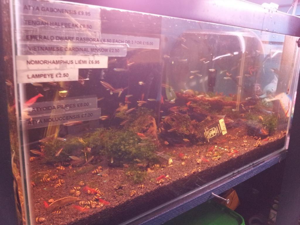 Tienda en Londres - Aquatic Design Centre 20130912_174637_zpsa37abdbe