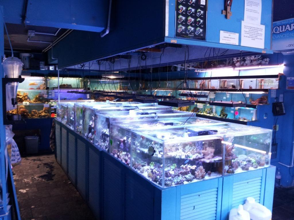 Tienda en Londres - Aquatic Design Centre 20130912_174840_zpsb0628693