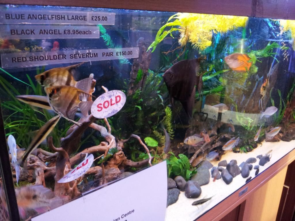 Tienda en Londres - Aquatic Design Centre 20130912_175808_zps03e085d8