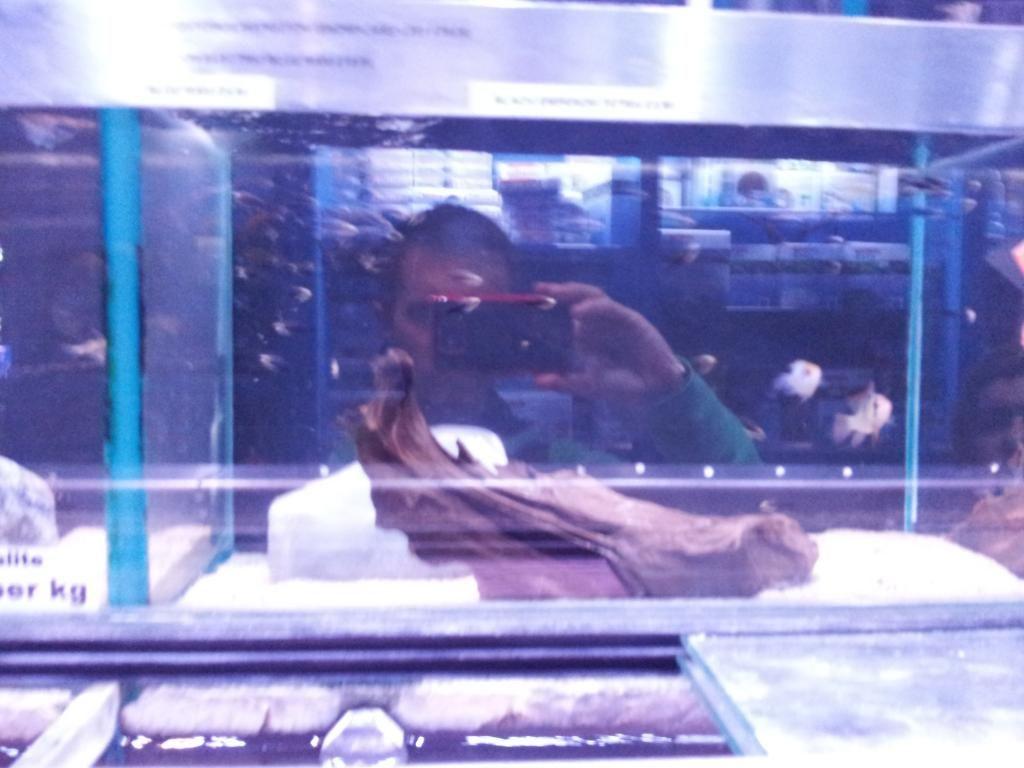 Tienda en Londres - Aquatic Design Centre 20130912_180045_zpse0e06035
