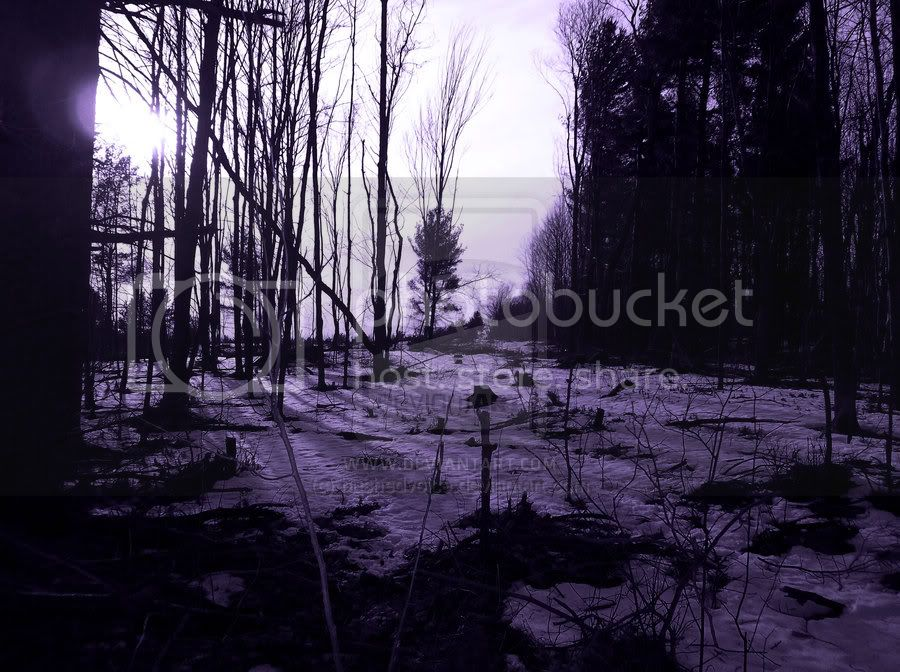 Purple Nature Series Purple_woods_version2_by_hushedvoice-d4si4yd