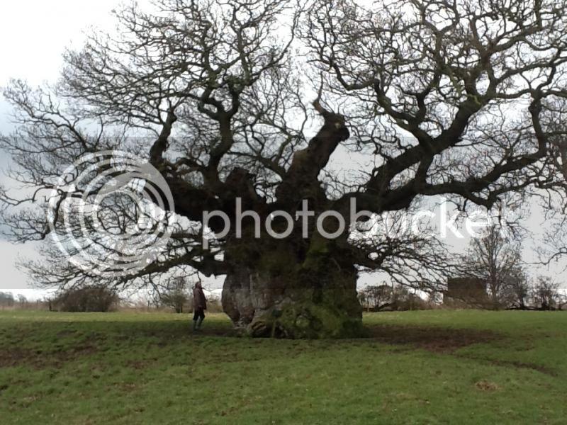 Oak style, Privet BOWTHORPE1