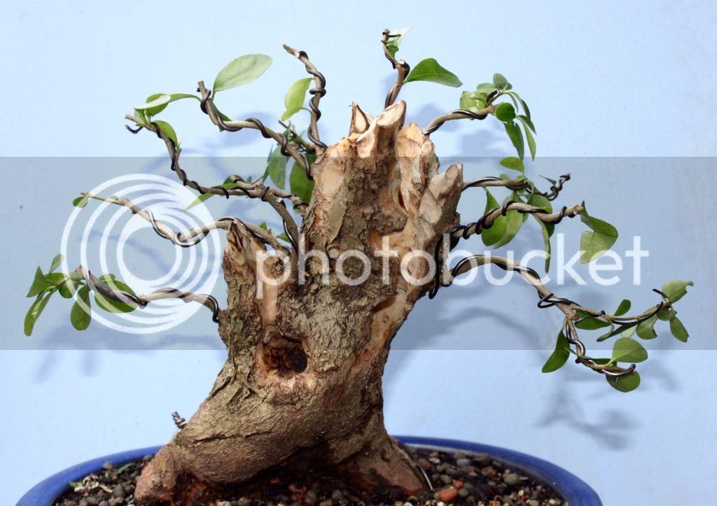 Oak style, Privet Priv1
