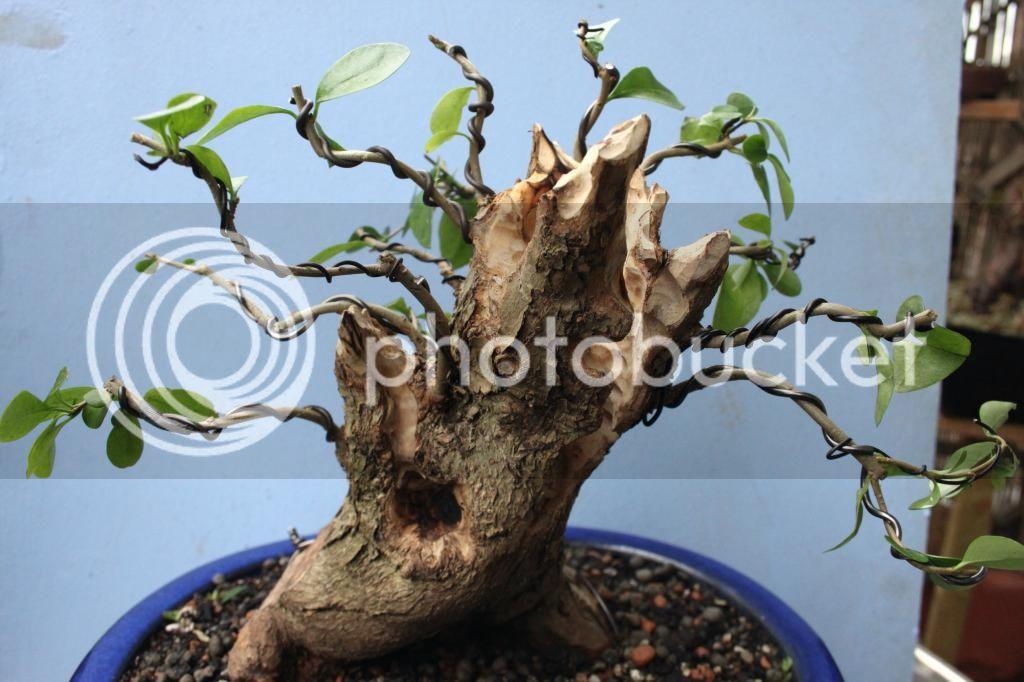 Oak style, Privet Priv3