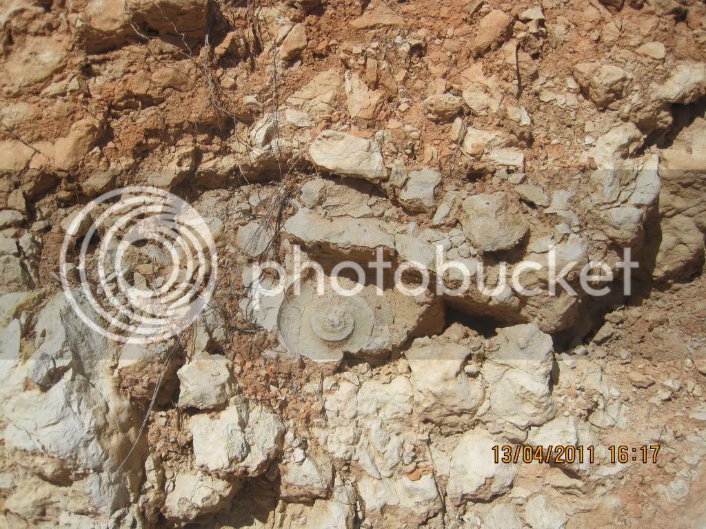 fotos de fosiles in situ IMG_1281