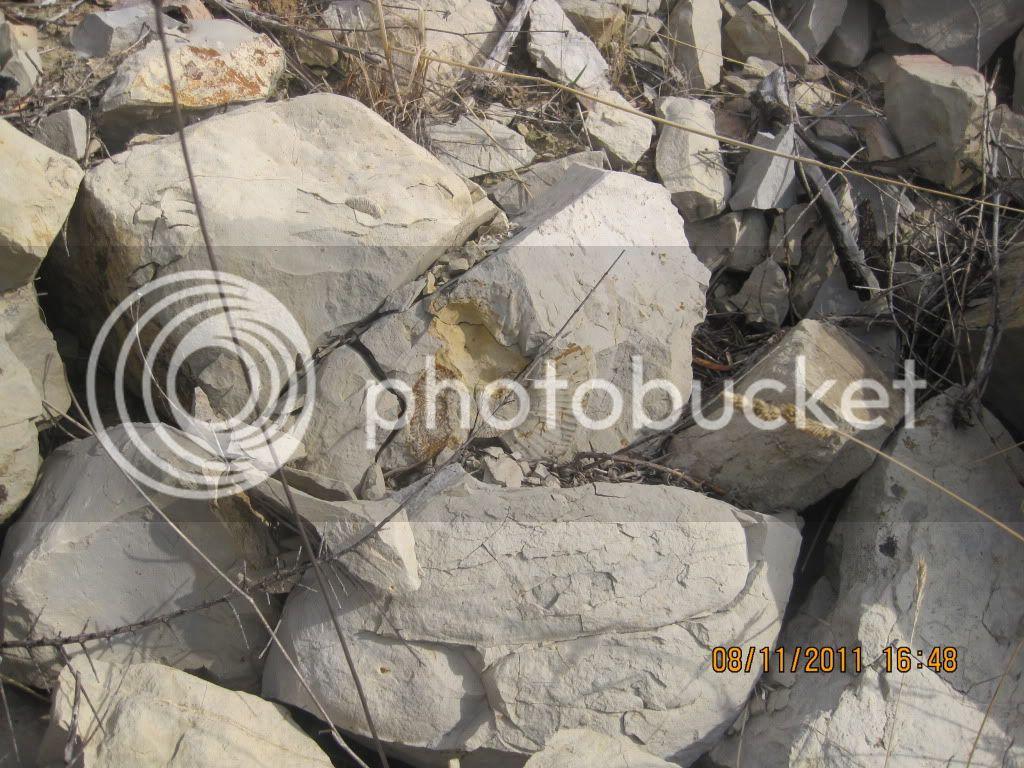 fotos de fosiles in situ IMG_1728