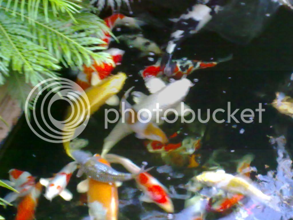 My pond 07122009024