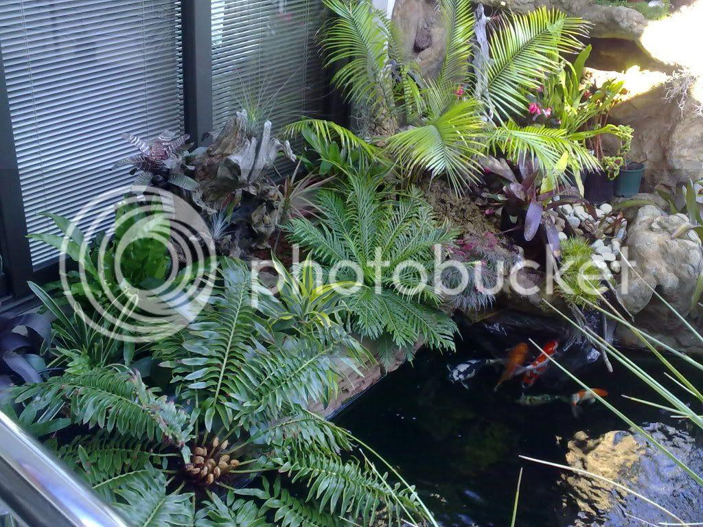 My pond 07122009034