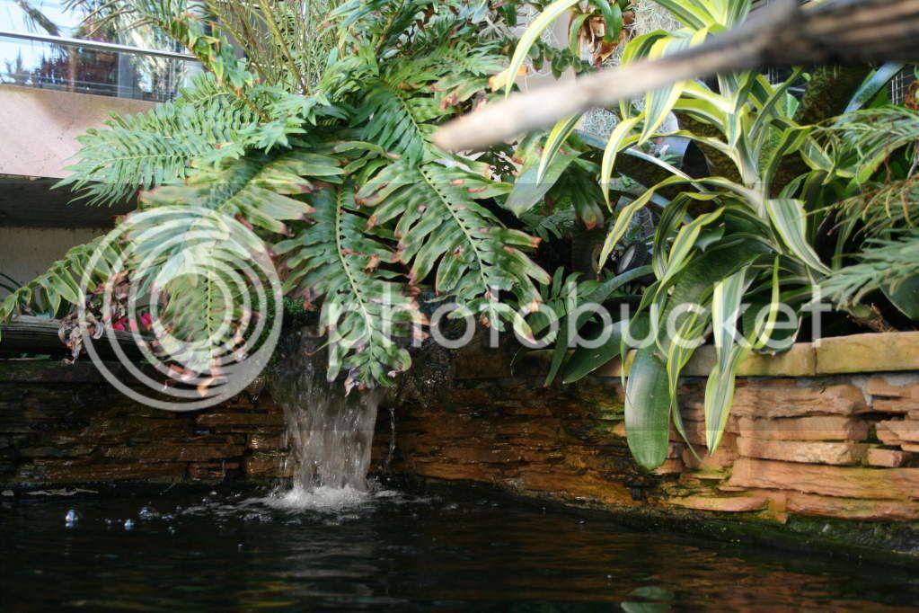 My pond Ch0049