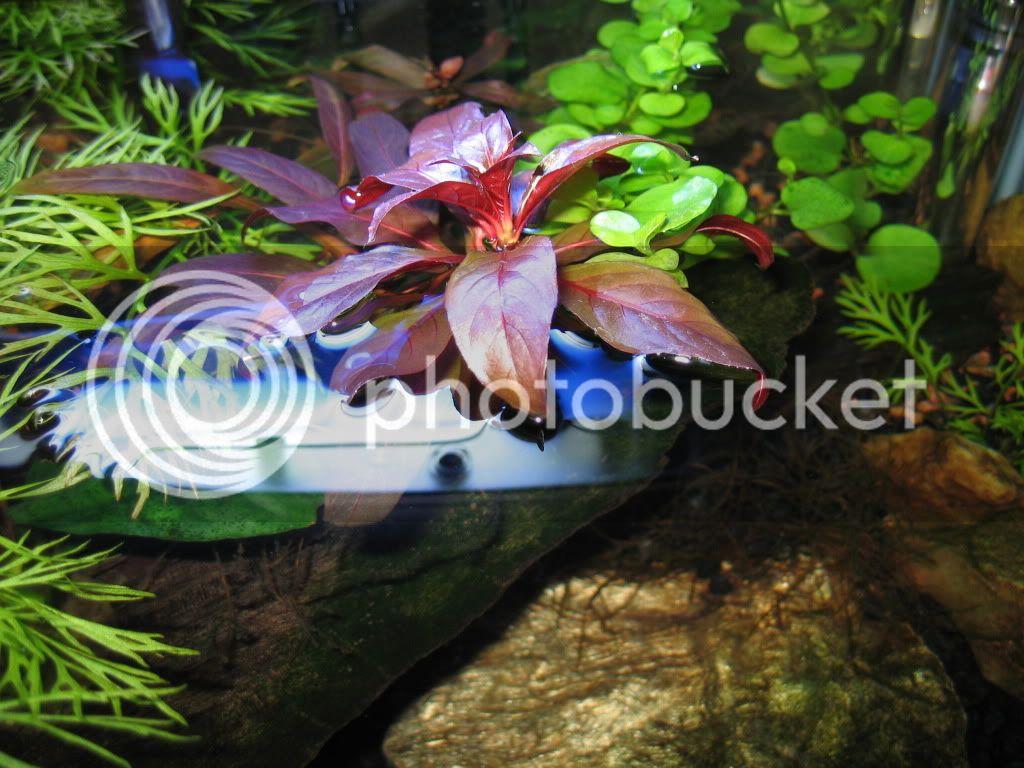 Dan's Planted 3g Pico - Page 2 IMG_1156