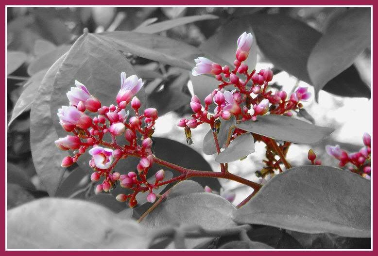 Trắng Đen và ... màu 4481_flowercoloremphasistreklensaca