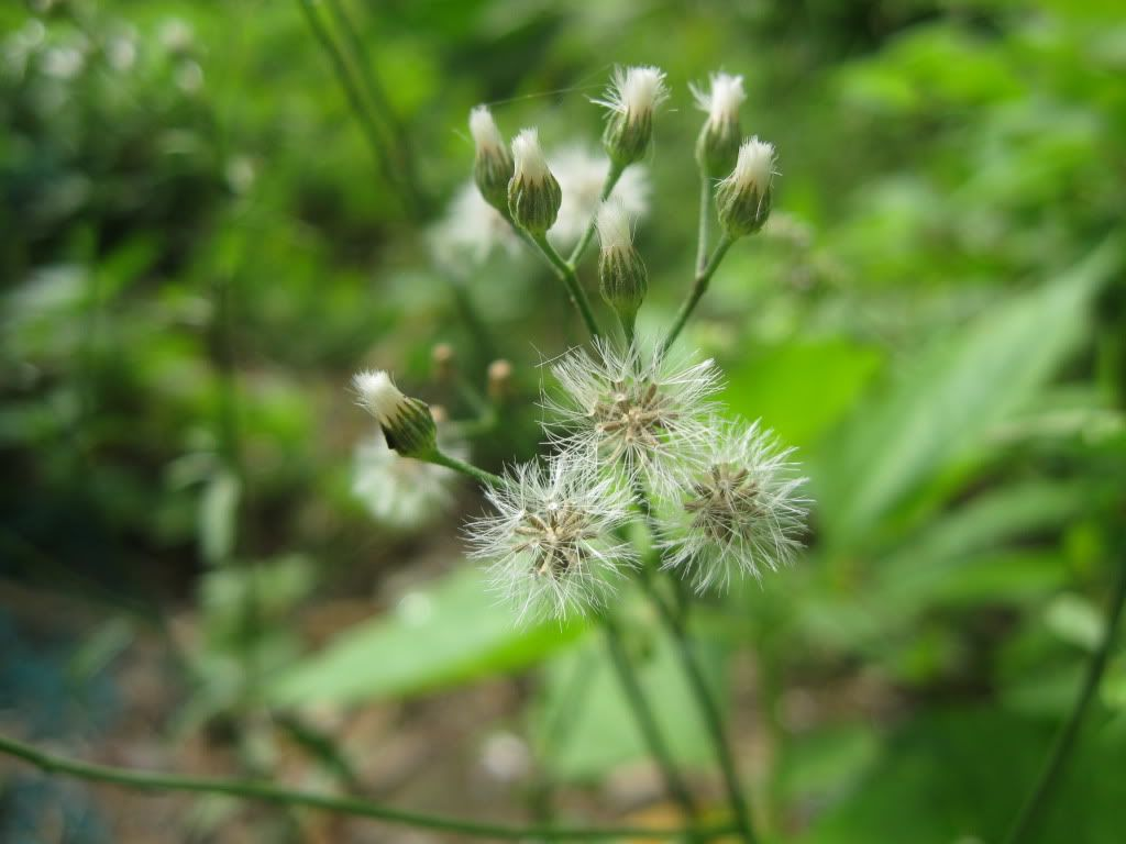 BCA nhỏ trong vườn... IMG_0132