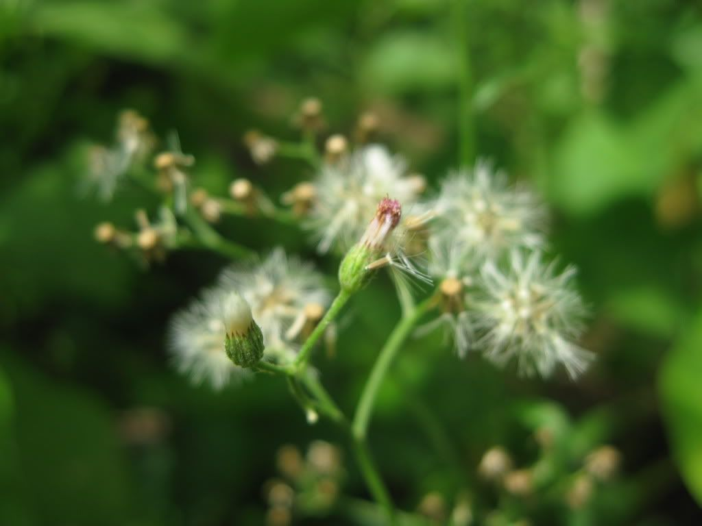 BCA nhỏ trong vườn... IMG_0143