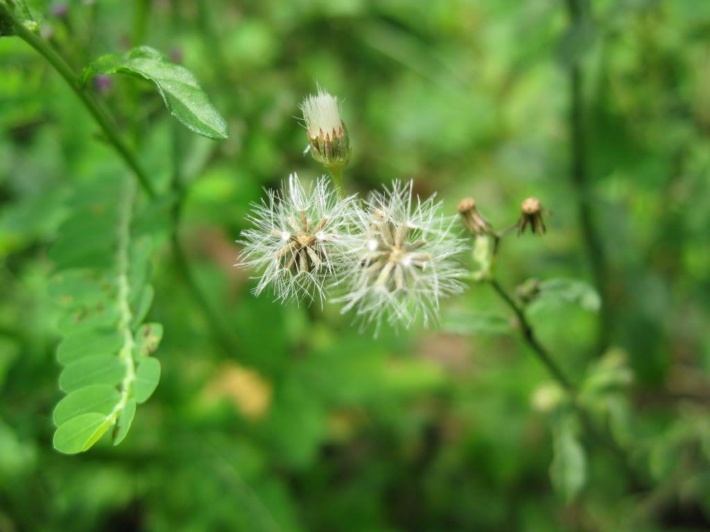 BCA nhỏ trong vườn... IMG_0150