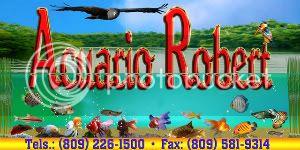 Ganadores del Concurso Diciembre 2011 - Enero 2012 LogoAcuario-2