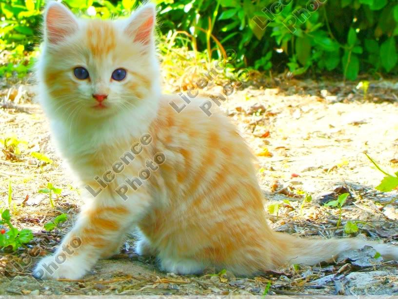 Hey-lo.~ Chats-Cats1