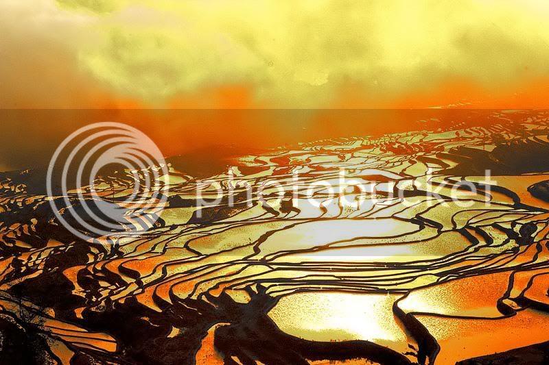 Cultivos de arroz en JApon 27e58712