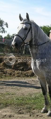 Lipicanska kobila i omica Djakovo0021