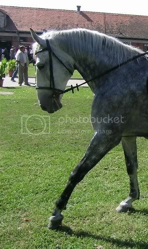 Lipicanska kobila i omica Djakovo0083