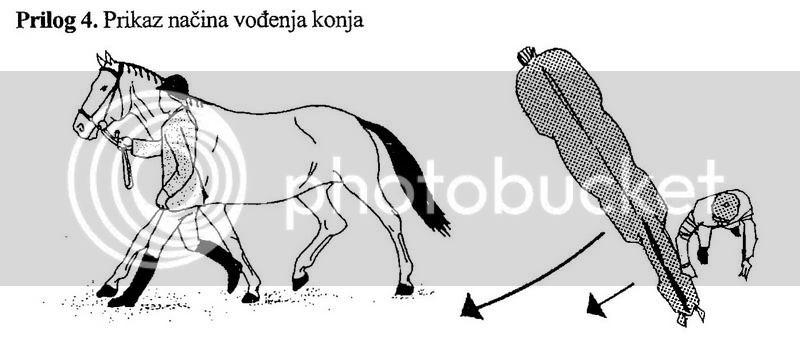 Predvodenje konja u trokutu 13_resize