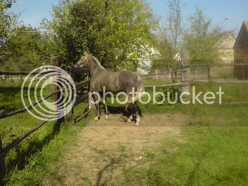 Lipicanska kobila i omica Mala_resize