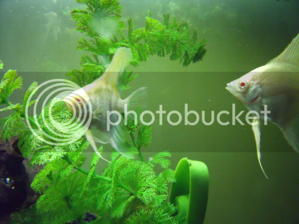 New Albino's DSCF1161