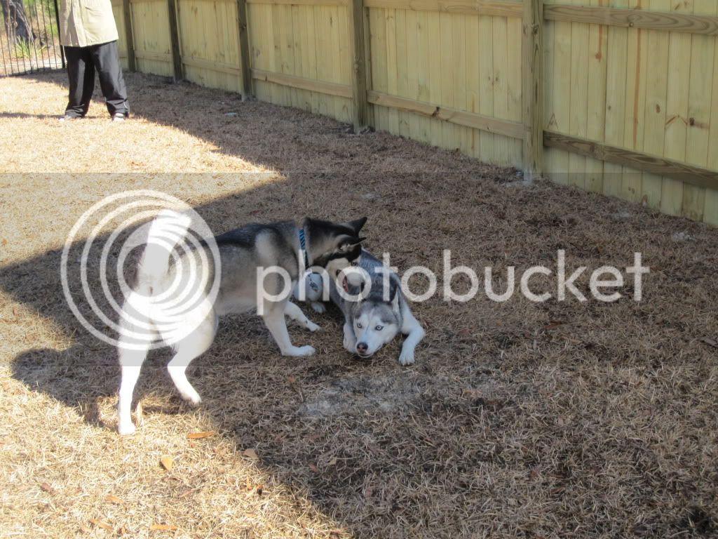 Dakota & Sora's weekend adventure! IMG_0543-1