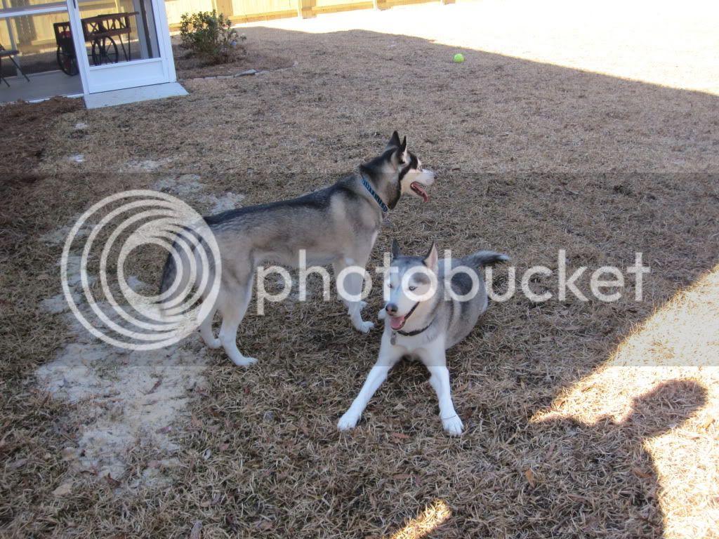 Dakota & Sora's weekend adventure! IMG_0545