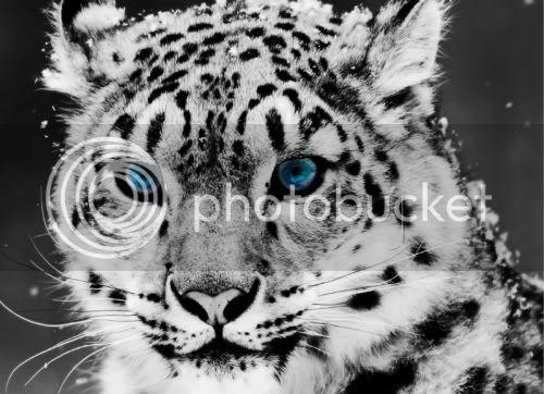 Airis - Goddess of Nature Snowleopard-1