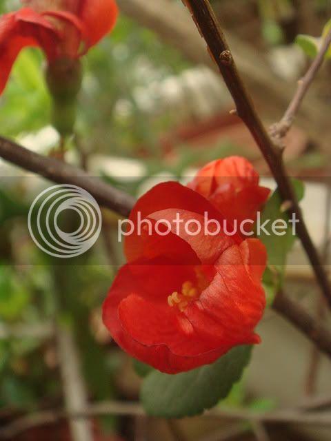 亂亂種的花園 DSC02215