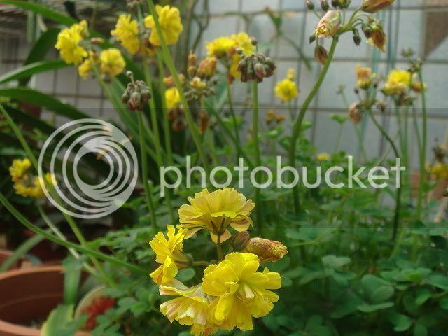亂亂種的花園 DSC02227