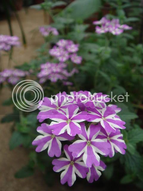 亂亂種的花園 DSC02397