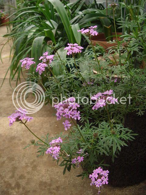 亂亂種的花園 DSC02428
