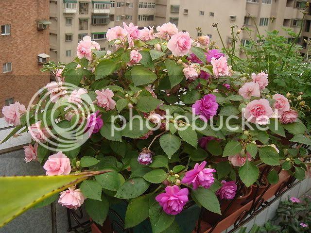亂亂種的花園 DSC02435