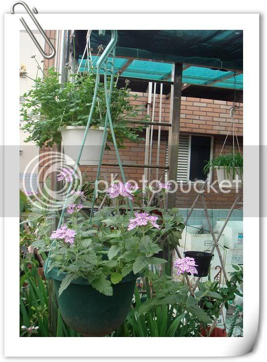 亂亂種的花園 DSC02447