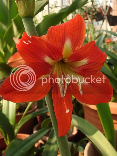 亂亂種的花園 DSC04554