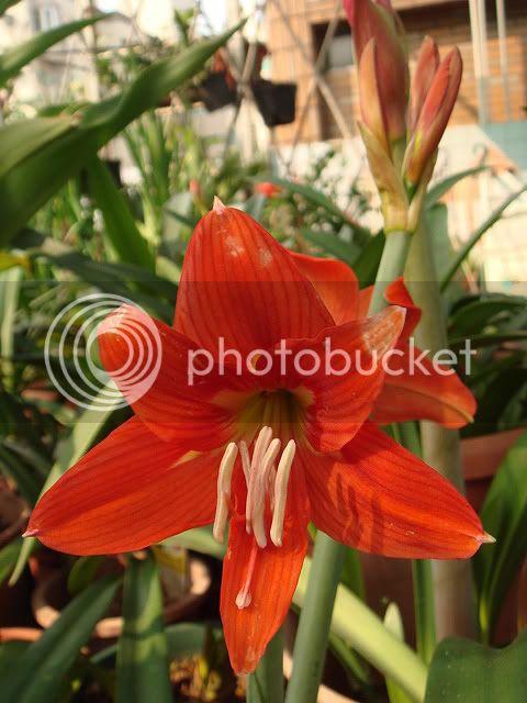 亂亂種的花園 DSC04555