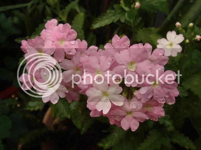 亂亂種的花園 DSC04599