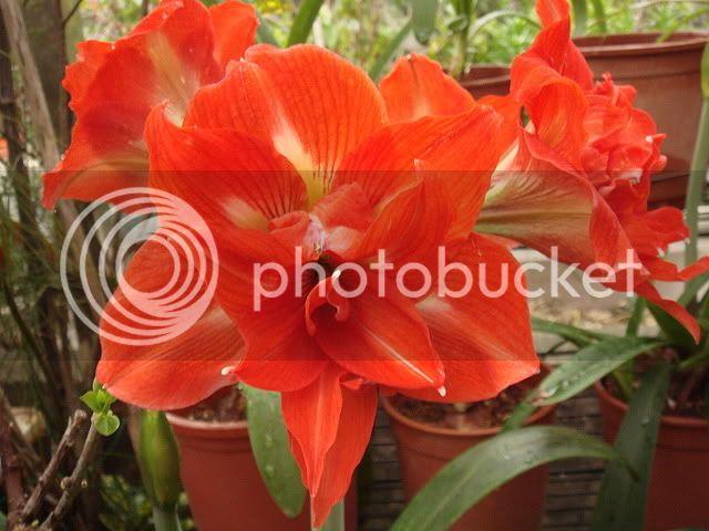 亂亂種的花園 DSC04608