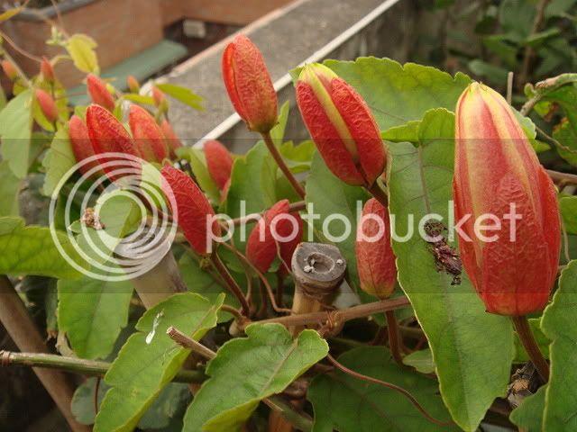 亂亂種的花園 DSC04631