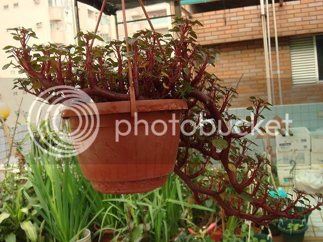 亂亂種的花園 DSC04681