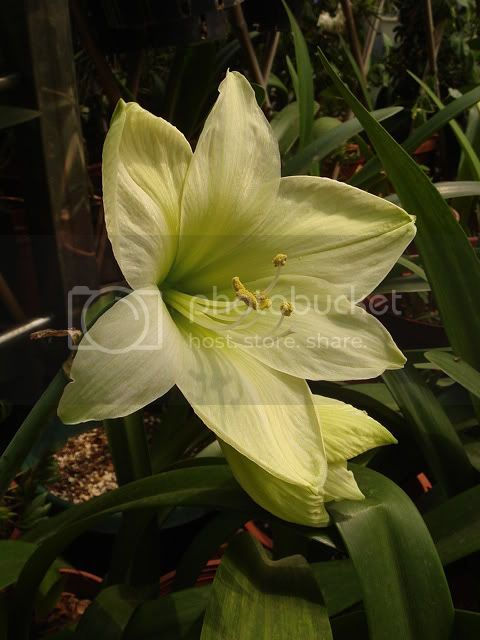 亂亂種的花園 DSC04703