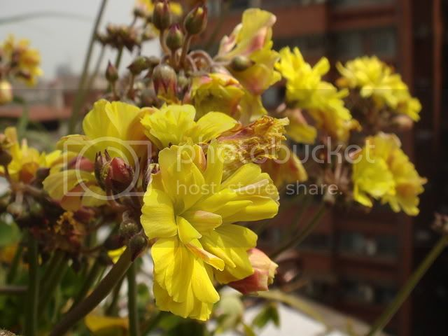 亂亂種的花園 DSC04887