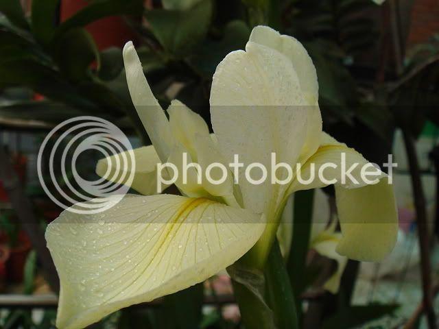 亂亂種的花園 DSC05074